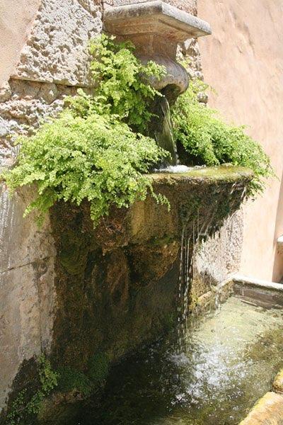 Fontaine et bassin avec v g tation for Fontaine et bassin