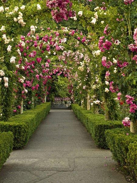 Allée de jardin bordée de buis et surplombée d\'arches fleuries